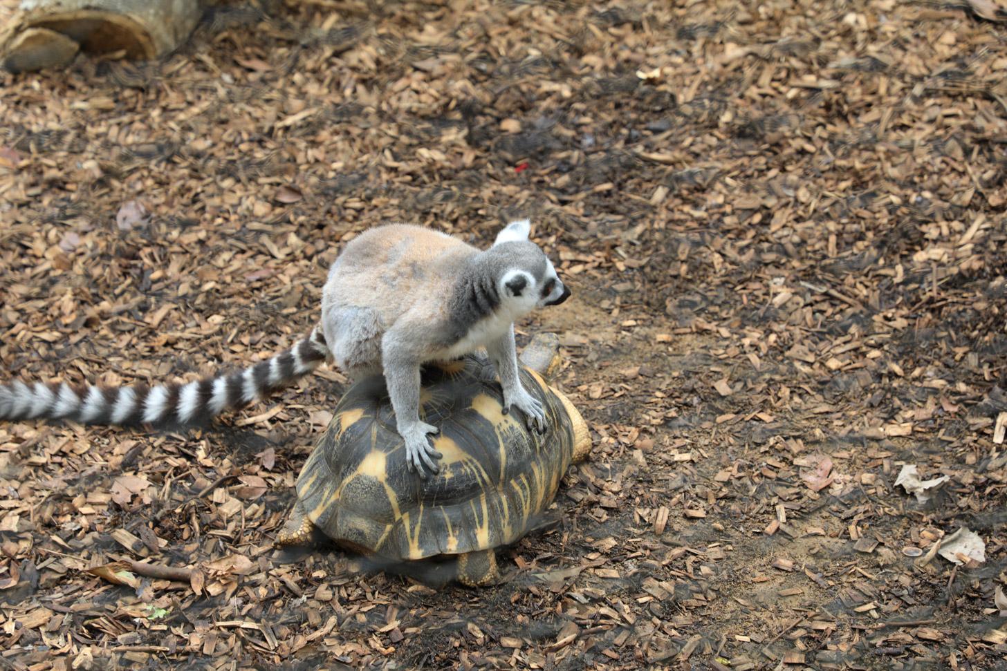 fauna van Mauritius